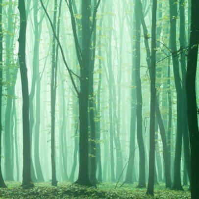 Calming Tree Wind