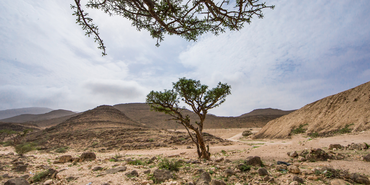 What makes Frankincense oil so special