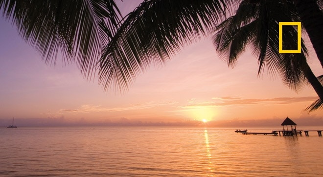 Paradise Blend Image